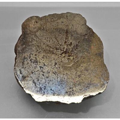 Ichtyosaurus Vertebra Bone